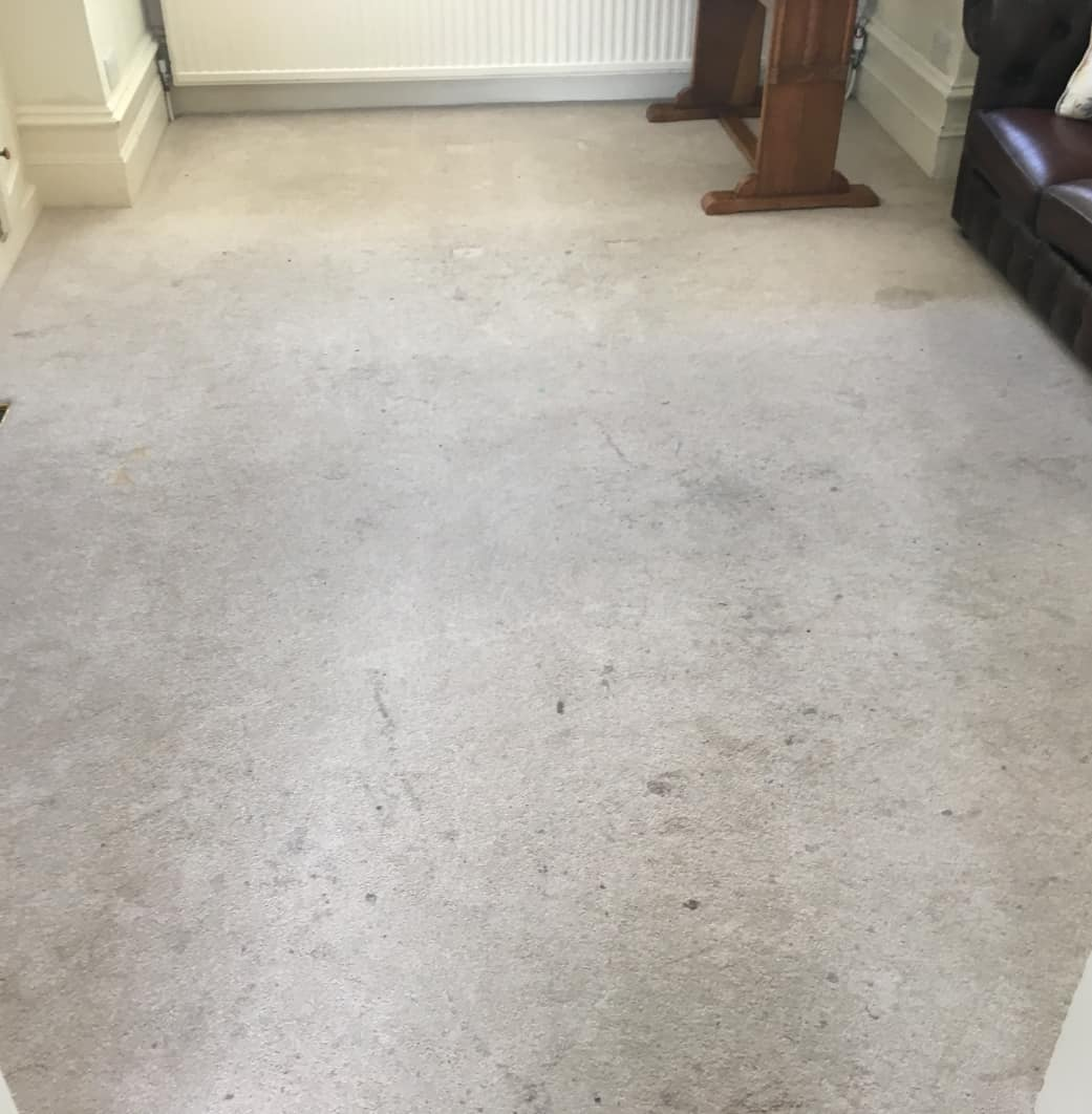 Carpet Cleaning Before & After Photos 18