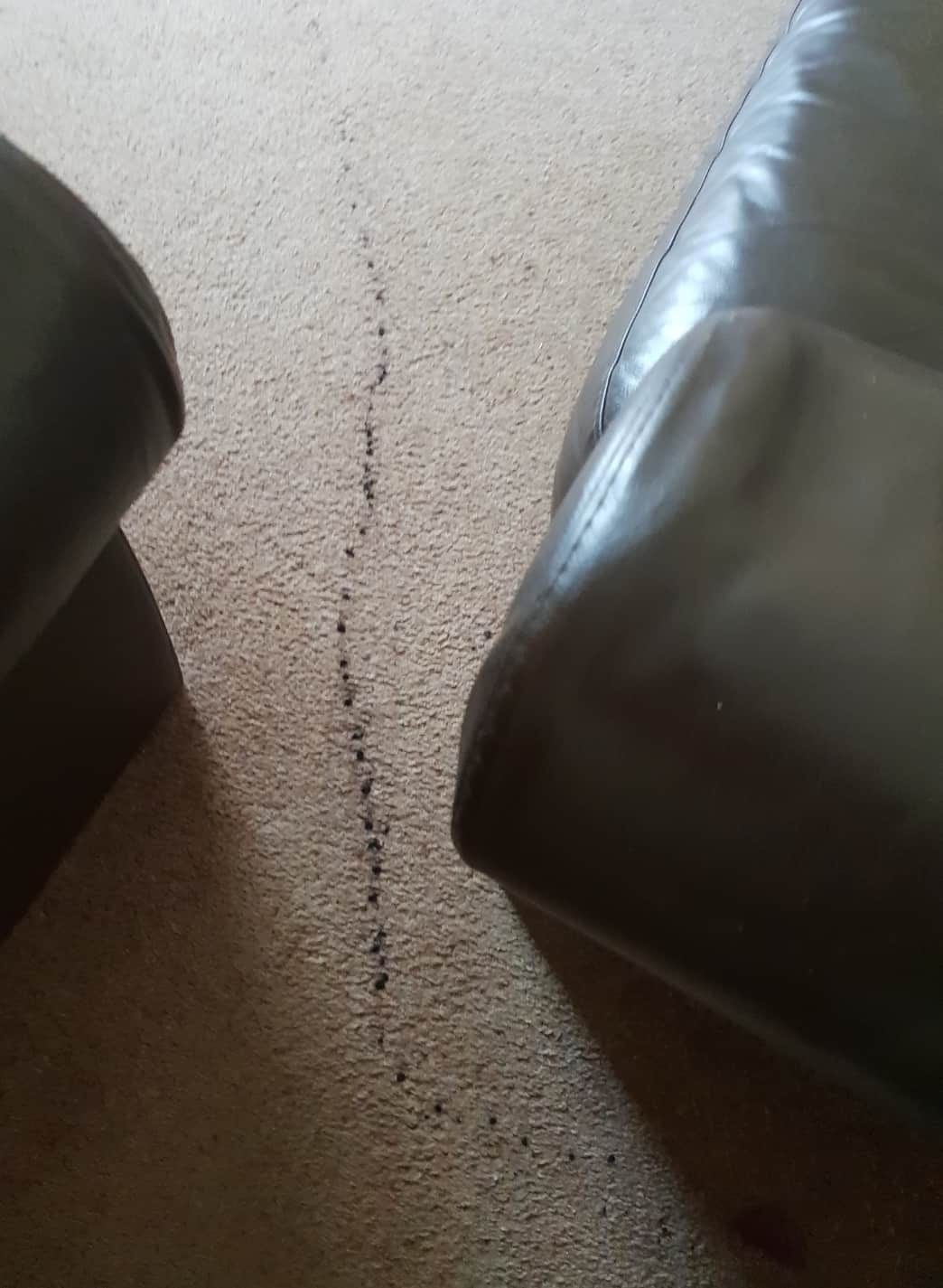 Carpet Cleaning Before & After Photos 26